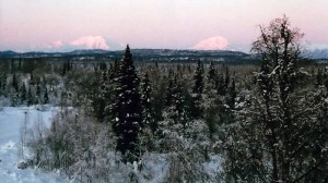 denali-view-adventures-winter-view