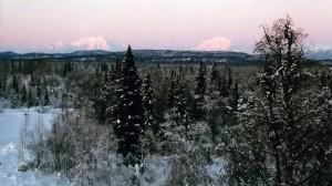denali-view-adventures-winter-view