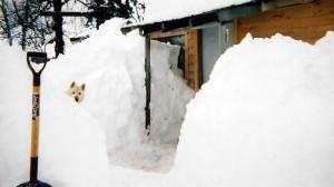 denali-view-adventures-winter4
